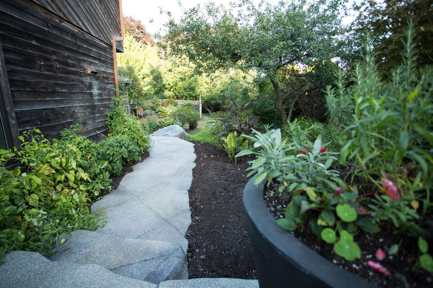 Side yard custom concrete walkway and garden